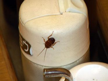 ゴキブリがはいまわる様子の連続写真。